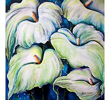 Arum Lilies Photographic Print