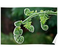 Unfurling fern Poster