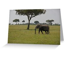 Elephant in Kenya, Africa Greeting Card