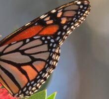 Monarch on a Flower Sticker