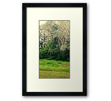 Swampy Evening Framed Print
