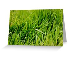 Grass after rain Greeting Card
