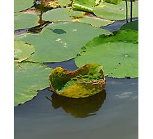 Funny Lily Pad Photographic Print