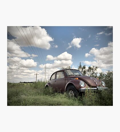 Odessa Beetle Photographic Print