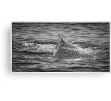 Whales off Narooma Canvas Print