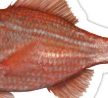 Bight redfish  Sticker