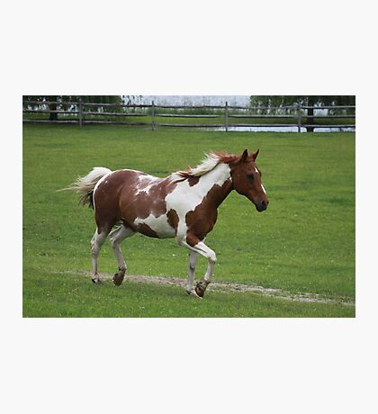 Paint Horse Photographic Print