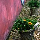 Flower Pots - Pena National Palace by Marilyn Harris