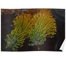 Desert Nectar Flower Poster