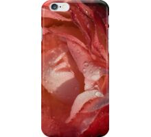 A Wonderful Cream-and-Red Rose With Dewdrops iPhone Case/Skin