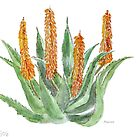 Aloe ferox - Nature's ultimate healer by Maree  Clarkson
