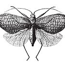 Antique Moth illustration by monsterplanet