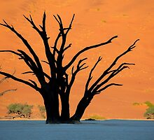 Camel Thorn Trees by Jill Fisher