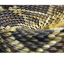 Eastern Diamondback Rattlesnake Scales Photographic Print