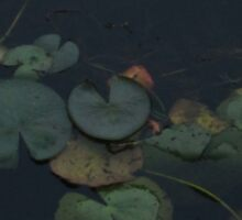 Water Lily Pads Sticker