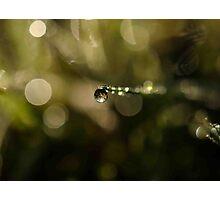 Grass blade rain drop Photographic Print