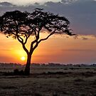 Serengeti Sunset by phil decocco