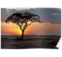 Serengeti Sunset Poster
