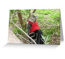 Lily - bird proofed in Garden Greeting Card