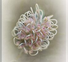 Grevillea in Pastel #2 by Elaine Teague
