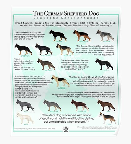 The German Shepherd Dog Poster