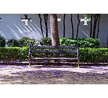 A bench in the park Photographic Print