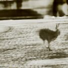 City Hare seeking Refuge VRS2 by vivendulies