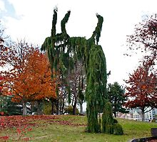 Leaning Tree of Victoria by AnnDixon