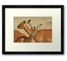 Impala - Funny Nature - African Wildlife Background Framed Print