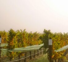 Vineyard Mist Sticker