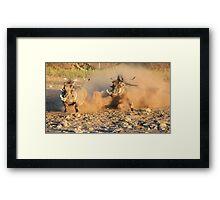 Warthog - Dust, Tusks and Hormones Framed Print