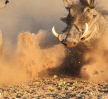 Warthog - Dust, Tusks and Hormones Sticker