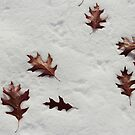 Fallen Leaves on the Snow by debsdesigns