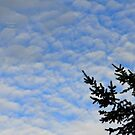 """"""" Blue Mackerel Sky """" by Richard Couchman"""