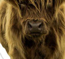 Shaggy Highland Cow IV Sticker