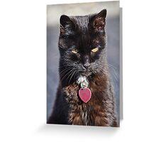 Little Black Kitty Greeting Card