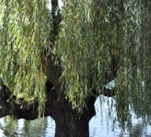 Old Weeping Willow Tree Sticker