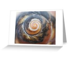 Brown snail shell spiral - 2016 Greeting Card