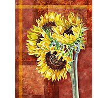 Decorative Sunflowers Photographic Print