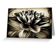 Dahlia Dahlia Greeting Card