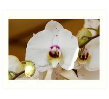 orchid bloom Art Print