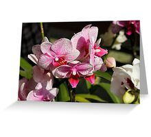 orchid bloom Greeting Card