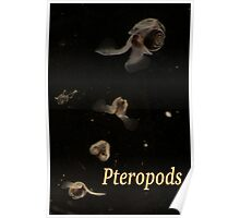 Pteropods Poster