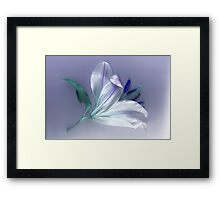 A Hint of the Blues Framed Print