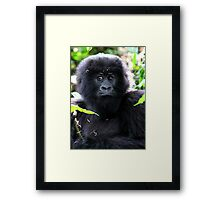 """""""What are you going to do to me?"""" Juvenile Mountain Gorilla Framed Print"""