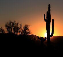 Desert Sunset by Ann  Van Breemen