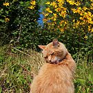 Ginger cat licking back in garden by turniptowers