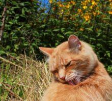 Ginger cat licking back in garden Sticker