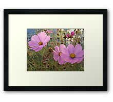 Cosmos - End  of Season (3) Framed Print