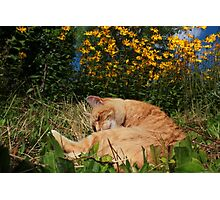 Ginger cat and yellow flowers Photographic Print